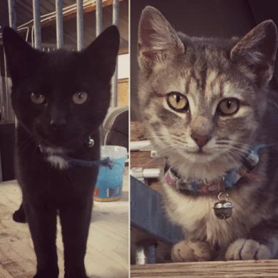 Zorro & Odin